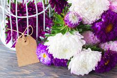 Mix of aster flowers Stock Photos