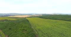 AERIAL 4K of the landscape ant the sunflower fields form a distance - stock footage