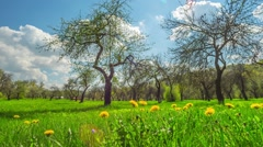 Spring apple orchard, time-lapse with crane - stock footage