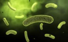 Conceptual image of common bacteria. - stock illustration