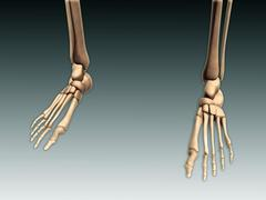 Conceptual image of bones in human legs and feet. Stock Illustration