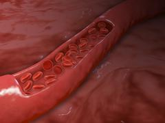 Stock Illustration of Artery cross section with red blood cell flow.