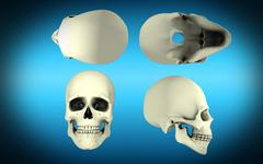 View of human skull from different angles. Stock Illustration