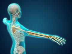 X-ray view of human body showing skeletal bones in the arm and hand. - stock illustration