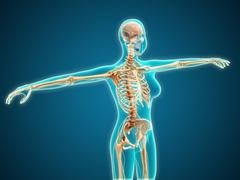 X-ray view of female body showing skeletal system. - stock illustration