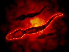 Microscopic view of male sperm cells. Stock Illustration