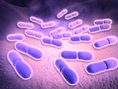 Microscopic view of Listeria monocytogenes. Stock Illustration