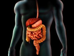 Human body and digestive system, perspective view. Stock Illustration