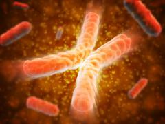 Microscopic view of telomeres highlighted at the tips of chromosome. - stock illustration