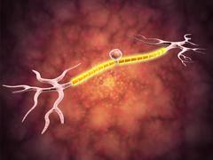 Microscopic view of a unipolar neuron. Stock Illustration