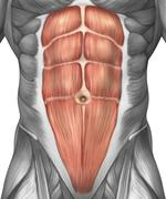 Close-up view of male abdominal muscles. - stock illustration