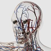 Medical illustration of head arteries, veins and lymphatic system. - stock illustration