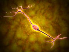 Microscopic view of a bipolar neuron. - stock illustration