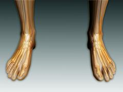Conceptual image of human legs and feet with nervous system. - stock illustration