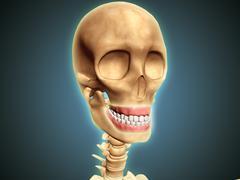 Human skeleton showing teeth and gums. - stock illustration