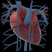 3D rendering of human heart and thoracic veins. - stock illustration