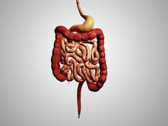 Front view of human digestive system. Piirros