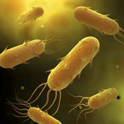 Conceptual image of flagellate bacterium. Stock Illustration