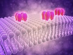Conceptual image of GABA receptors. Stock Illustration