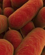 Microscopic view of bacteria. - stock illustration