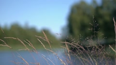 Seaside grass Stock Footage
