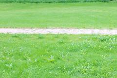 Paved path tiles in middle of green lawn in summer sunny day - stock photo