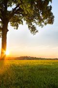 Romantic Sunrays - stock photo