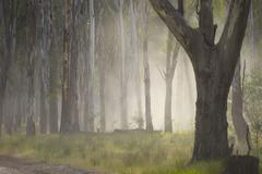 Eerie dramatic mystic fog in woods - stock photo