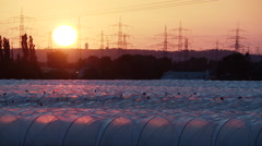 Greenhouses for strawberry production in Sunset in germany Stock Footage