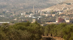 Palestine Olive Trees Time-lapse Stock Footage