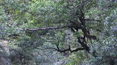 4k Zoom out dry rocky waterway in mountain forest Madeira Stock Footage