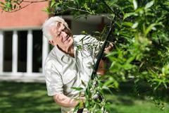 Horticulturist cutting tree branch - stock photo
