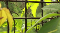 Creeper plant and iron net fence close-up shot Stock Footage