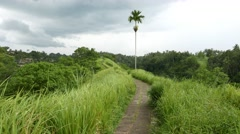 Amazing path run through grassy ridge, single palm tree ahead, tropical nature Stock Footage