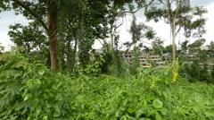 Villa buildings seen through lush rainforest tangle, slide camera movement Stock Footage