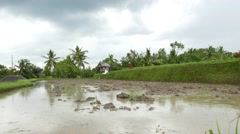 Flooded empty rice paddy terrace, muddy earth, raindrops over water surface Stock Footage