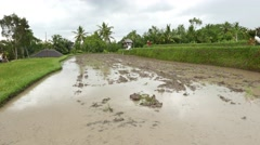 Rice field preparation, empty swampy ploughed earth, Balinese countryside Stock Footage