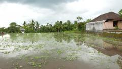 Empty flooded ricefield, some weeds over, village building aside Stock Footage