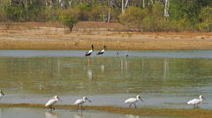 Bird billabong mary river national park Stock Footage