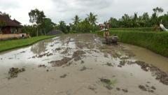 Balinese plougher prepare flooded rice field using tractor with rotary tiller Stock Footage