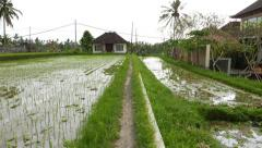 Move along footpath beside two paddy fields, rural Balinese foothill area Stock Footage