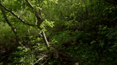 Tracking shot along dirt trail through green forest Stock Footage