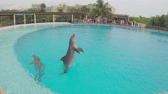 4K dolphins jumping in training pool Stock Footage