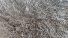 Breathing animal fur Stock Footage