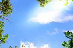Blue sky with green leaves frame background. Stock Photos