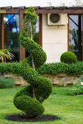Beautiful ornamental plant in the garden Stock Photos