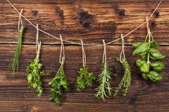 Culinary herbs. Stock Photos