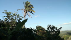 Palm tree in the wind Stock Footage