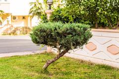 small crooked tree - stock photo