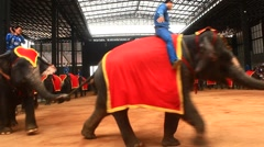 The show of elephants, Pattaya, Thailand Stock Footage
